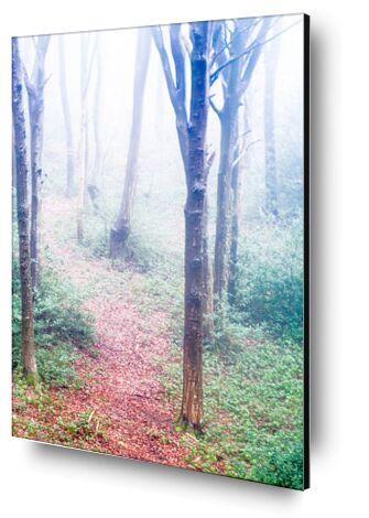 Dans les bois from Marie Guibouin, VisionArt, Art photography, Aluminum mounting, Prodi Art