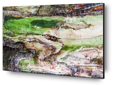 Le bois vert from Marie Guibouin, VisionArt, Art photography, Aluminum mounting, Prodi Art