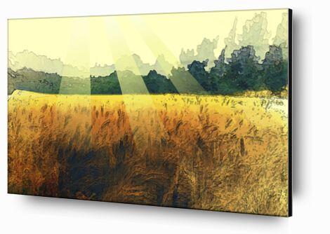 The wheat and its sun from Adam da Silva, Prodi Art, Art photography, Aluminum mounting, Prodi Art