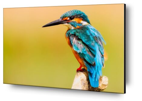 Kingfisher from Pierre Gaultier, Prodi Art, Art photography, Aluminum mounting, Prodi Art
