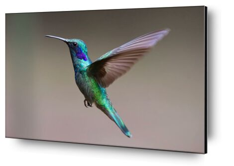 The Hummingbird from Pierre Gaultier, Prodi Art, Art photography, Aluminum mounting, Prodi Art