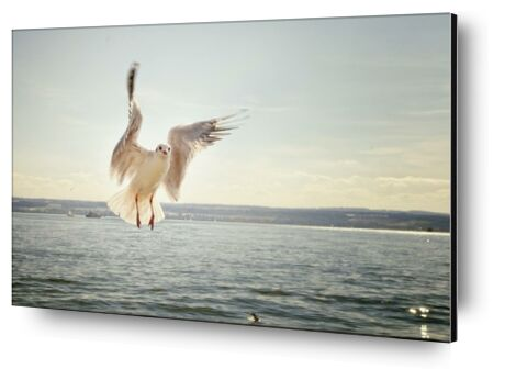 The approach of the seagull from Pierre Gaultier, Prodi Art, Art photography, Aluminum mounting, Prodi Art