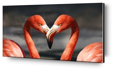 Couple of flamingo from Pierre Gaultier, Prodi Art, Art photography, Aluminum mounting, Prodi Art