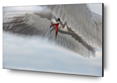 The gull race from Pierre Gaultier, Prodi Art, Art photography, Aluminum mounting, Prodi Art