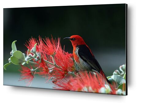 Bird on plant from Pierre Gaultier, Prodi Art, Art photography, Aluminum mounting, Prodi Art
