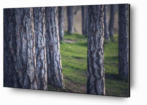 Trees de Caro Li, Prodi Art, Photographie d'art, Contrecollage aluminium, Prodi Art