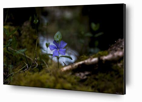 Violette de Caro Li, Prodi Art, Photographie d'art, Contrecollage aluminium, Prodi Art