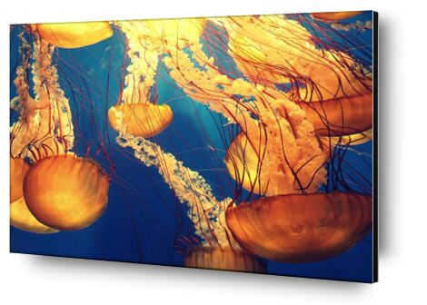 Jellyfish from the Sea from Pierre Gaultier, VisionArt, Art photography, Aluminum mounting, Prodi Art