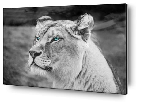 Regard percant from Aliss ART, Prodi Art, Art photography, Mounting on aluminium, Prodi Art