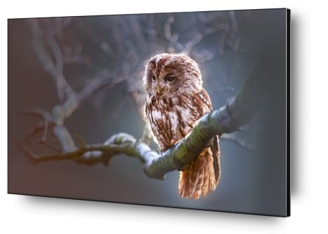 The owl's wait from Pierre Gaultier, Prodi Art, Art photography, Aluminum mounting, Prodi Art