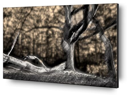 The shadow of the trunk from Adam da Silva, Prodi Art, Art photography, Aluminum mounting, Prodi Art