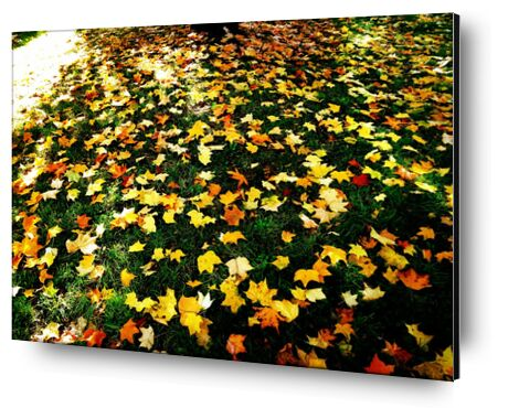 Feuilles d'automne from JuJuPhotographies, VisionArt, Art photography, Aluminum mounting, Prodi Art