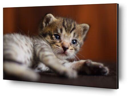 petit chaton de ivephotography, VisionArt, Photographie d'art, Contrecollage aluminium, Prodi Art