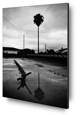 palmier avec souche et leur reflet de ivephotography, VisionArt, Photographie d'art, Contrecollage aluminium, Prodi Art