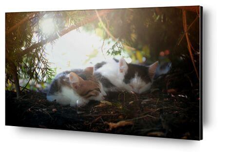 Chats qu dorment de Cyril Jourdan, Prodi Art, Photographie d'art, Contrecollage aluminium, Prodi Art
