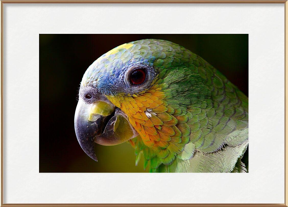 Parrot of the islands from Pierre Gaultier, Prodi Art, parrot, animals, bird, green, wings, animal, nature, peak, plumage, color, pen, amazon, exotic bird, tropical bird, ave, jungle, macaw