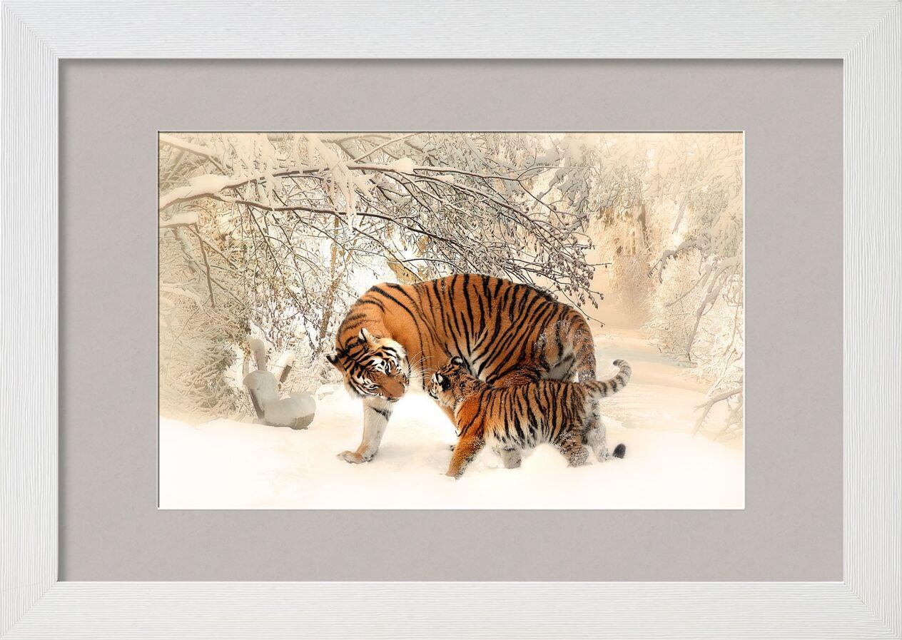 Tigres dans la neige de Pierre Gaultier, Prodi Art, tigre, Jeune, forêt, hiver, ambiance, jouer, beau, tiger baby, tigerfamile, famille, panthera tigris altaica, jeune animal, région sauvage, de plein air