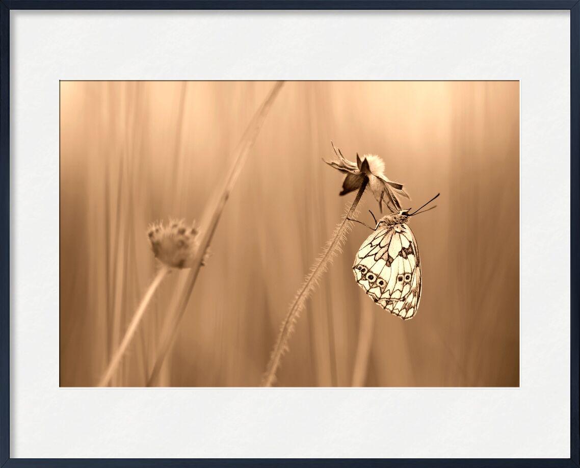 Serenity de Romain DOUCELIN, Prodi Art, Couleur, sépia, France, isere, insecte, animal, animaux, insolite, art, nature, faune, flore, champs, été, fleur, environnement, papillon, COULEUR SEPIA, DEMI DEUIL