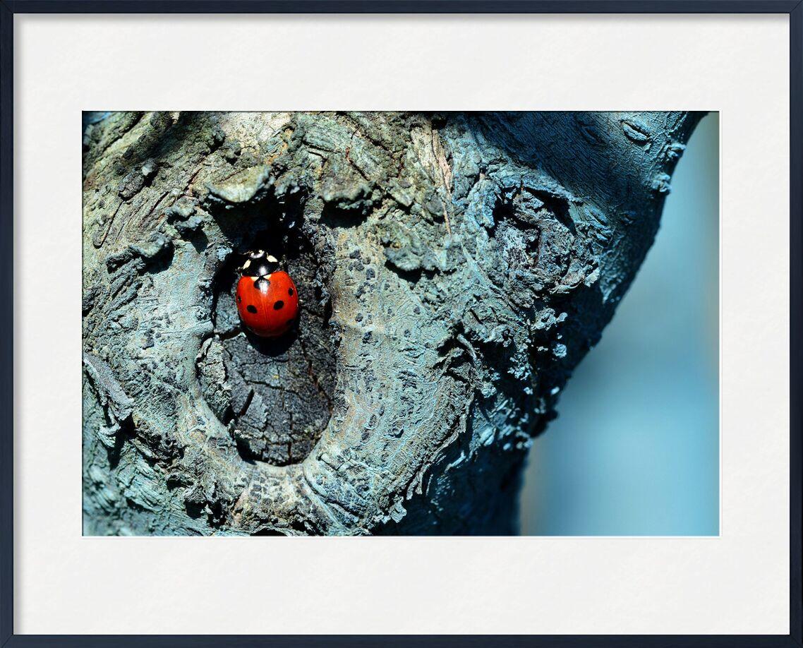 Contraste de Romain DOUCELIN, Prodi Art, macro, bleu, insolite, été, printemps, insecte, animaux, faune, environnement, nature, arbre, coccinelle, bouillie bordelaise, couleur bleu, arbre bleu, arbre fruitier, fongicides, les pesticides, coccinelles