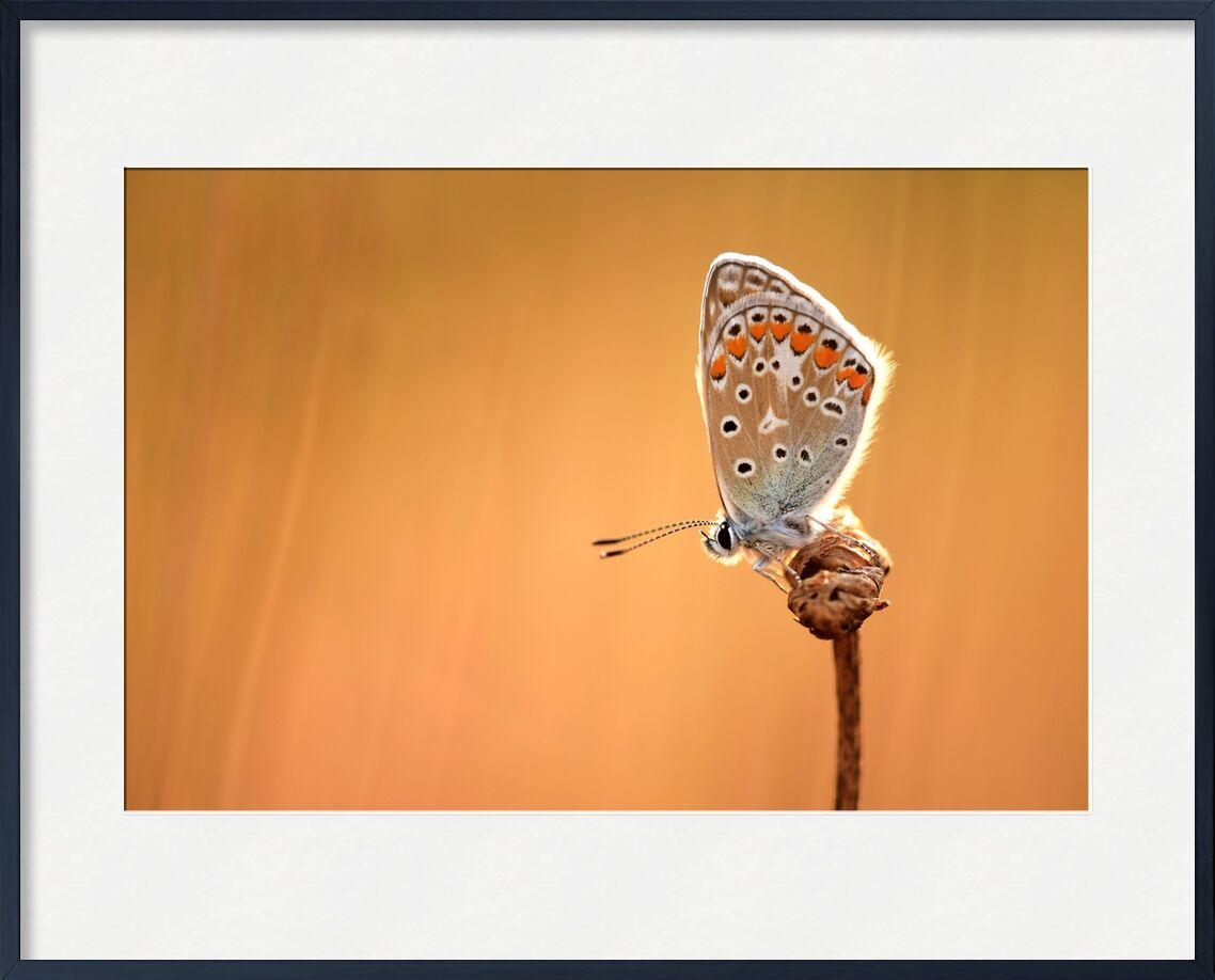 Beau regard de Romain DOUCELIN, Prodi Art, macro, paysage, été, printemps, papillon, animal, animaux, faune, environnement, nature