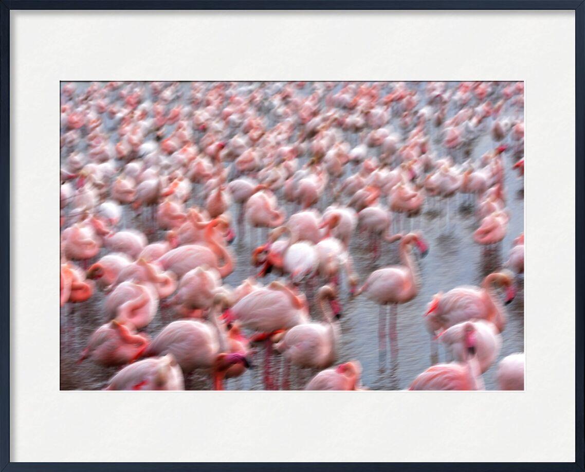 Flamingos Family de Romain DOUCELIN, Prodi Art, famille, Lac, hiver, printemps, oiseaux, oiseau, animaux, animal, flamant, Flamant rose, environnement, faune, Paysages, paysage, nature, abstrait, lac et oiseaux