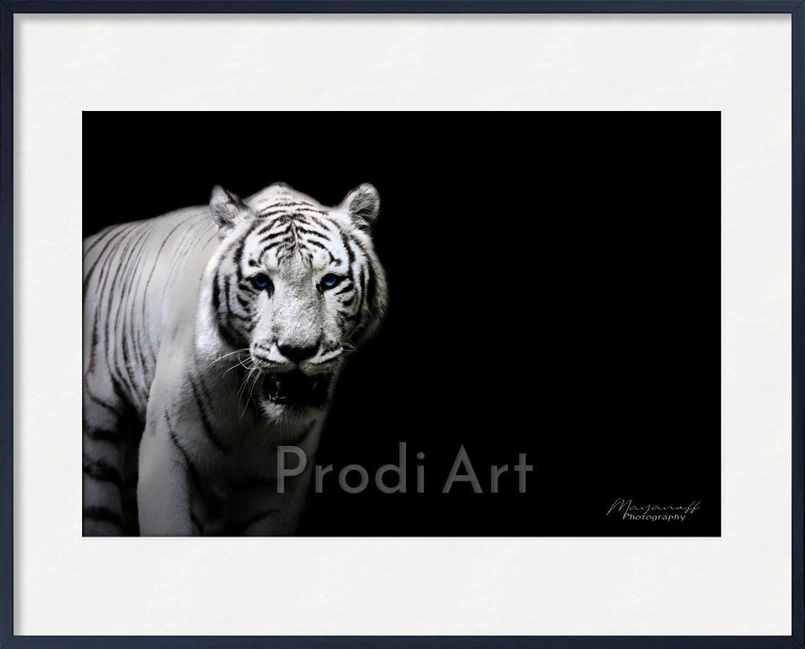Le Tigre de Sibérie sorti des grandes steppes de Mayanoff Photography, Prodi Art, tigre blanc, Sibérie, faune, faune sauvage, animal, portrait, félin, tigre