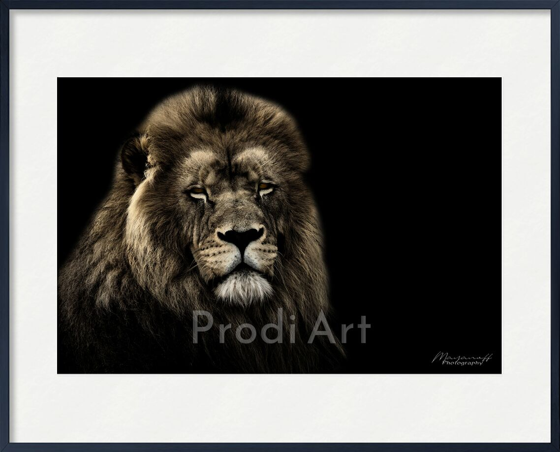 The King of the Savannah from Mayanoff Photography, Prodi Art, Lion, wildlife, wildlife portrait, animal portrait, wildlife