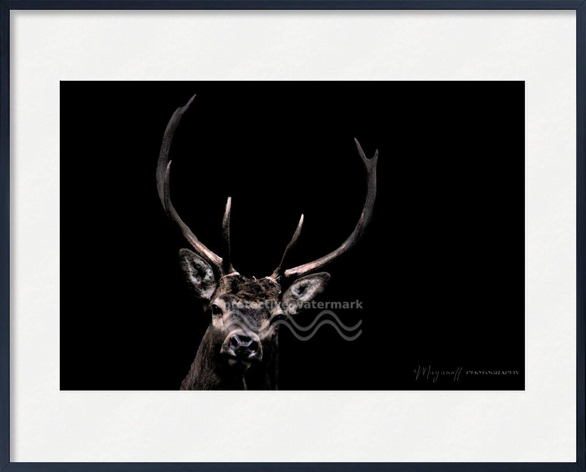 Le Fantôme des bois de Mayanoff Photography, Prodi Art, animaux sauvages, animal, portrait, bois, cerf