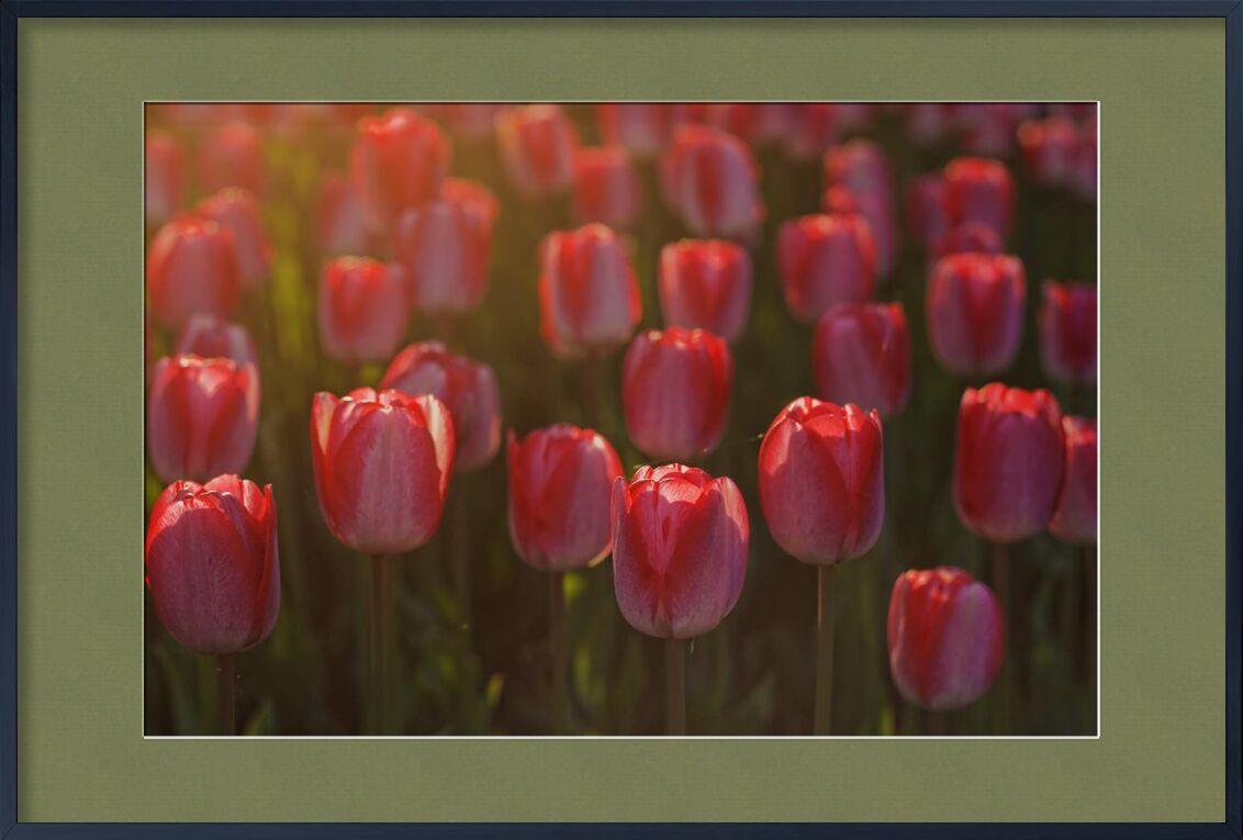 Tulipes roses de Pierre Gaultier, Prodi Art, tulipes, rouge, pétales, fleurs, flore, fleur, Floraison
