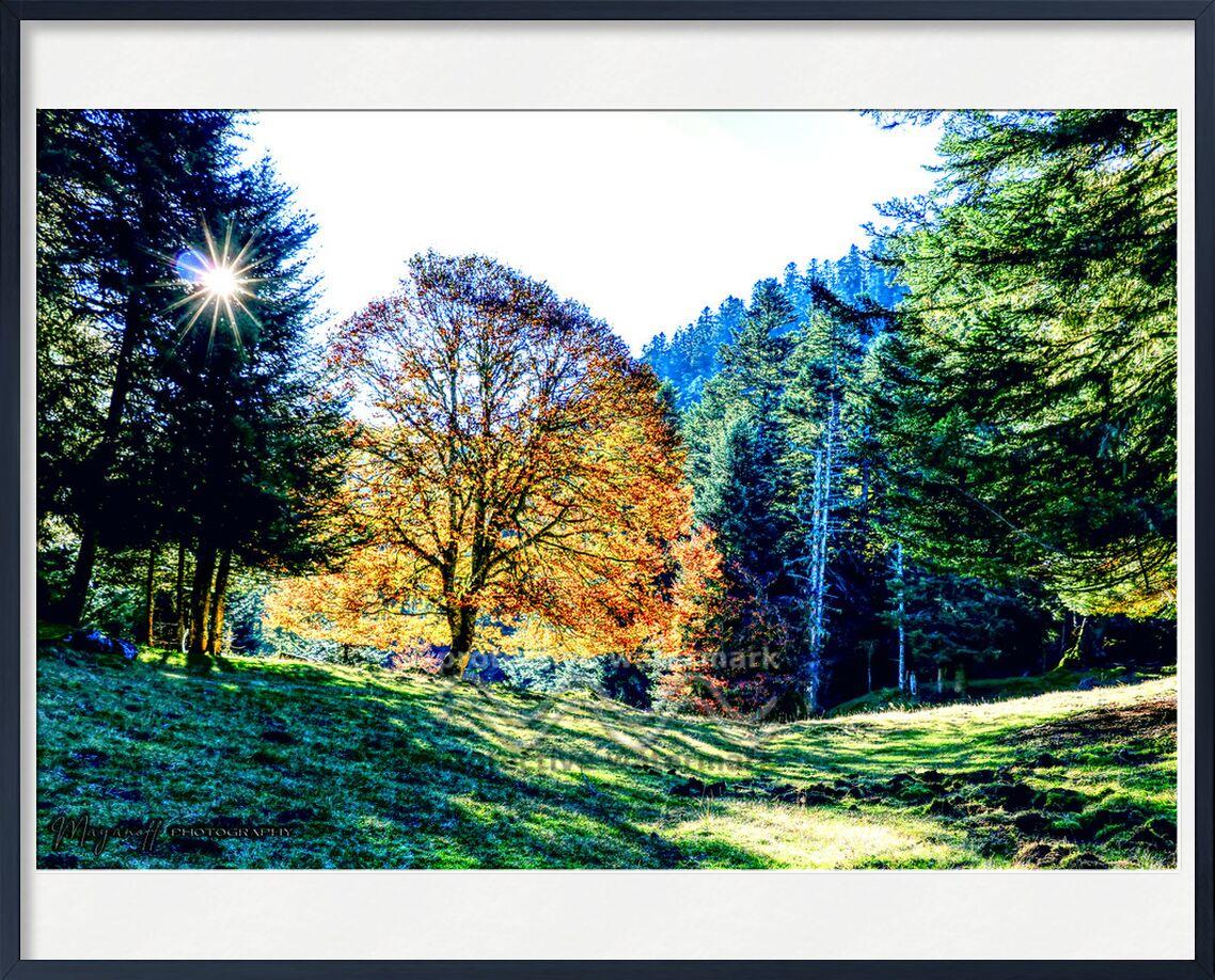 Lueur boisée de Mayanoff Photography, Prodi Art, clairière, contre-jour, région sauvage, beauté, matin, des arbres, montagnes, lumière, ombre, branches, lueur, soleil, arbre, nature sauvage, peu brillant, shadelight