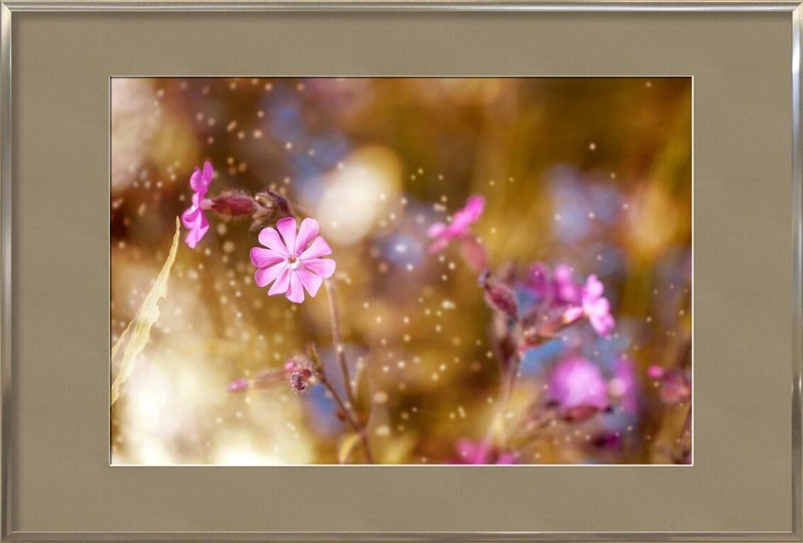 Flowers in the wind from Pierre Gaultier, Prodi Art, bloom, blooming, blossom, blur, close-up, delicate, depth of field, flora, flowers, focus, growth, majestic, nature, petals