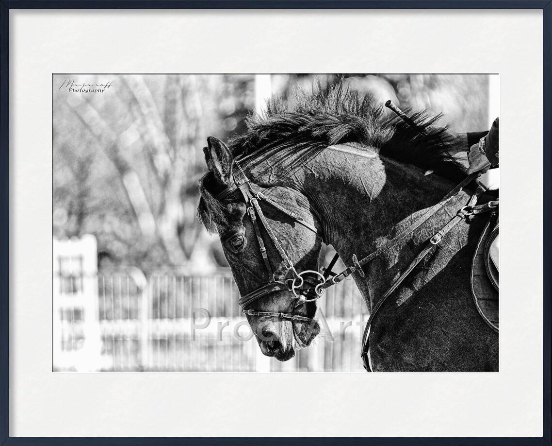 Focus from Mayanoff Photography, Prodi Art, head, mane, portrait, competition, horse, horse, animal, head, mane, competition, show jumping, show jumping