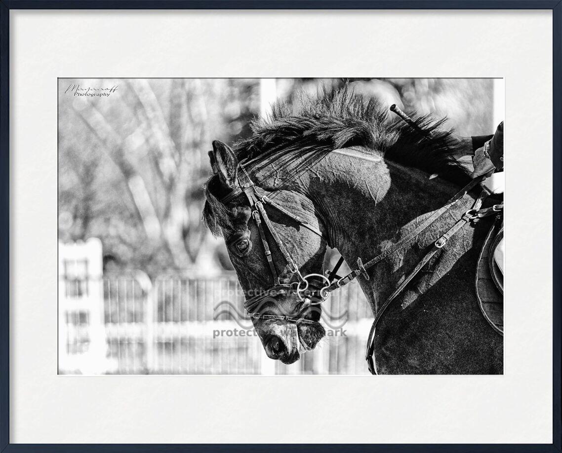 Concentration de Mayanoff Photography, Prodi Art, tête, crinière, portrait, concours, cheval, cheval, animal, tête, crinière, concours, jumping, saut d'obstacle