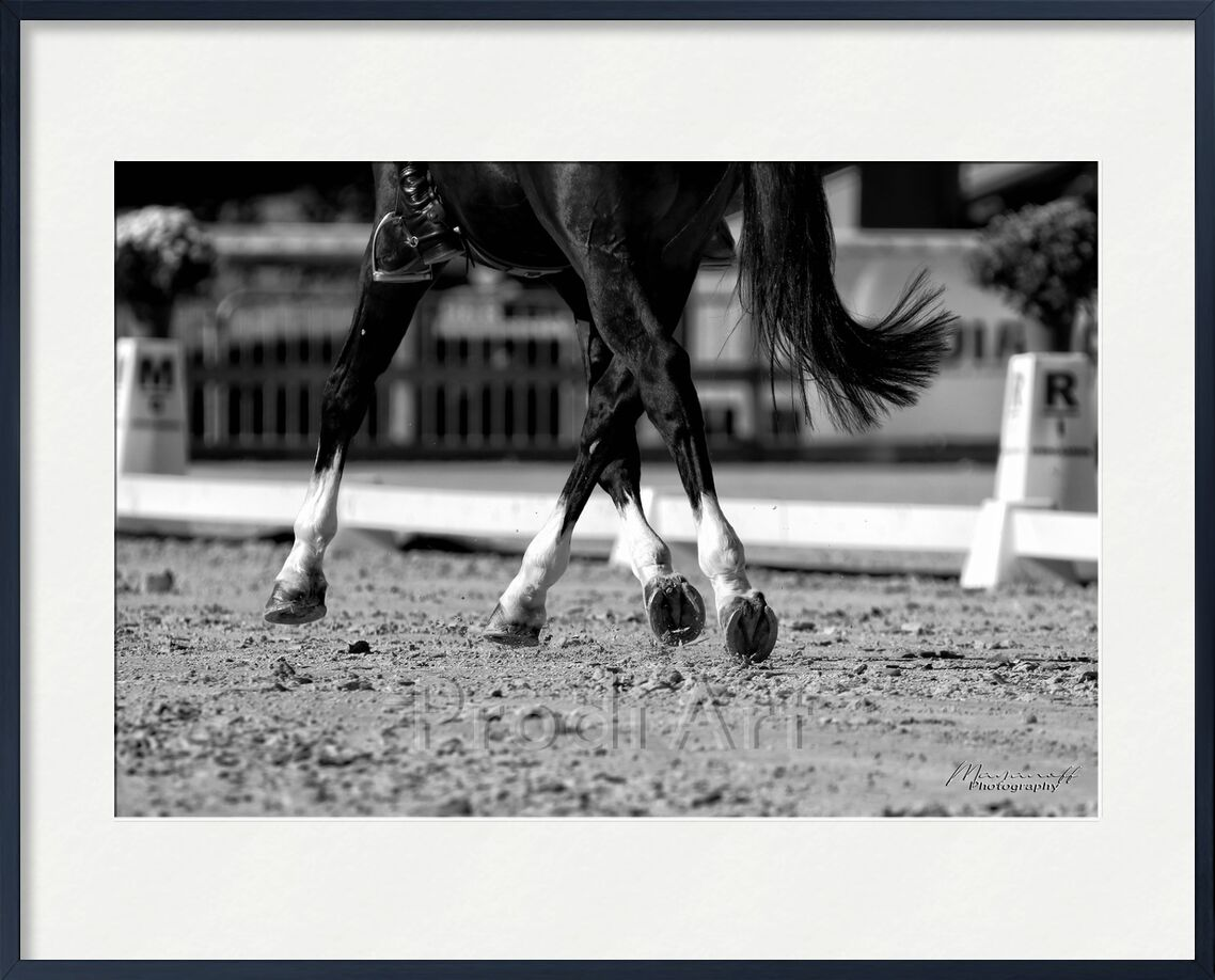 Lateral movements from Mayanoff Photography, Prodi Art, dressage, displacements, rider, competition, horse, movement, animal, cavalier, competition, horse