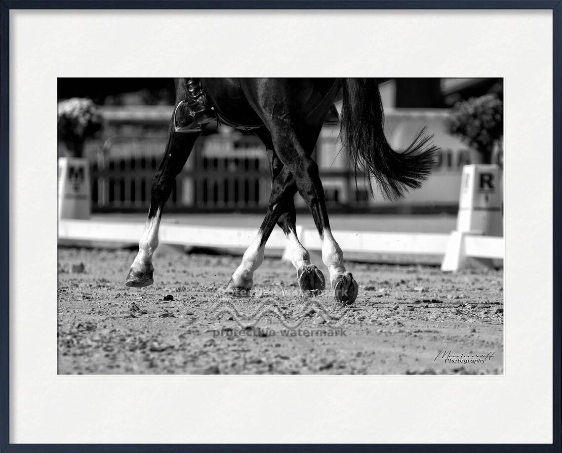 Déplacements latéraux de Mayanoff Photography, Prodi Art, dressage, déplacements, cavalier, concours, cheval, mouvement, animal, cavalier, concours, cheval
