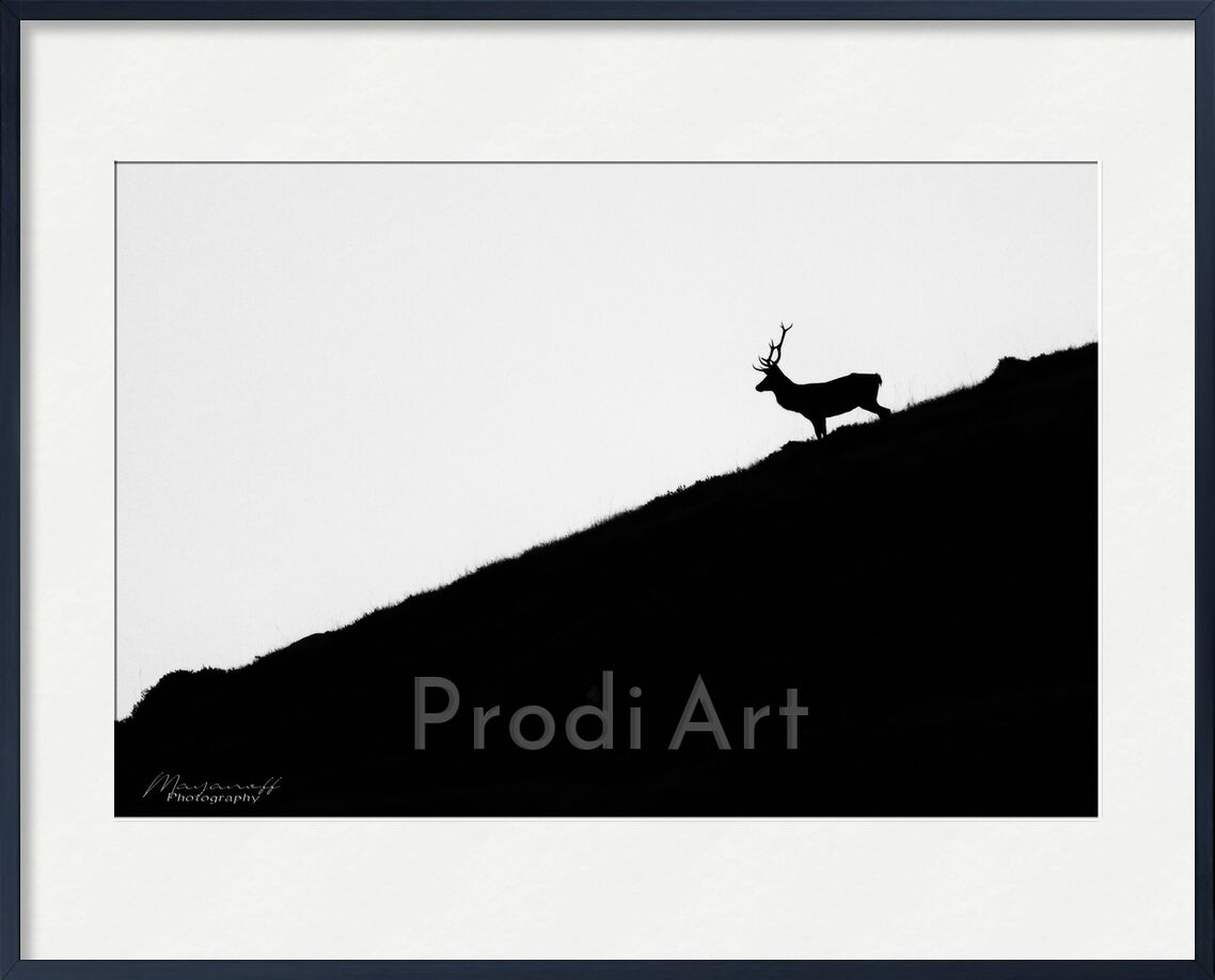 Night getaway from Mayanoff Photography, Prodi Art, deer, night, dusk, mountains, crest, animal, wildlife, deer, night, dusk, mountain, wildlife, ridge