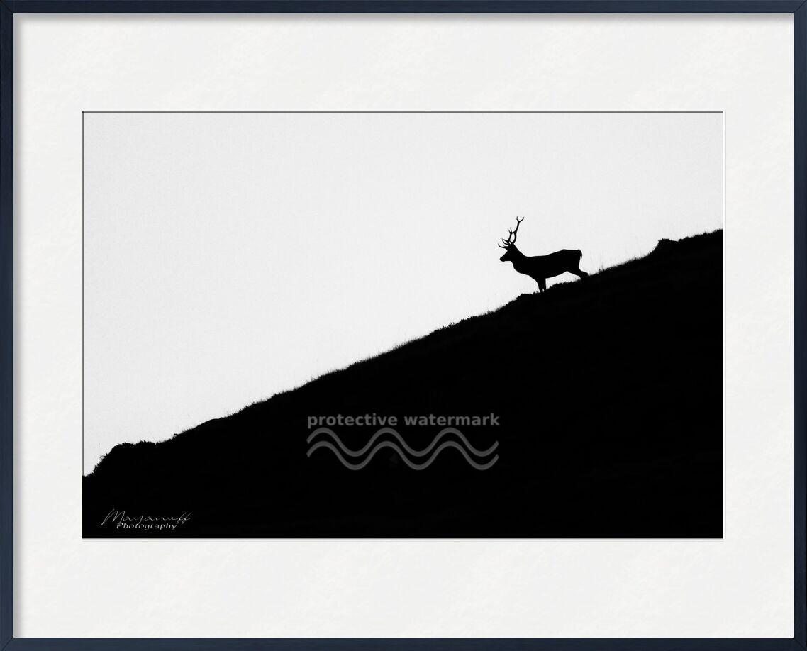 Escapade nocturne de Mayanoff Photography, Prodi Art, cerf, nuit, crépuscule, montagnes, crête, animal, faune sauvage, cerf, nuit, crépuscule, Montagne, faune, crête