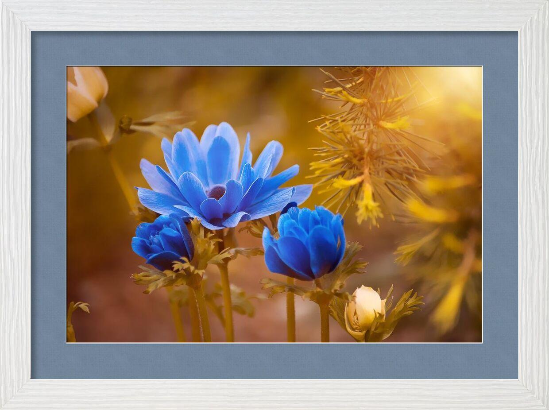 Fleur sauvage de Pierre Gaultier, Prodi Art, Floraison, épanouissement, fleur, brouiller, gros plan, délicat, profondeur de champ, flore, bourgeons de fleurs, fleurs, concentrer, croissance, macro, nature, pétales, Fleur sauvage