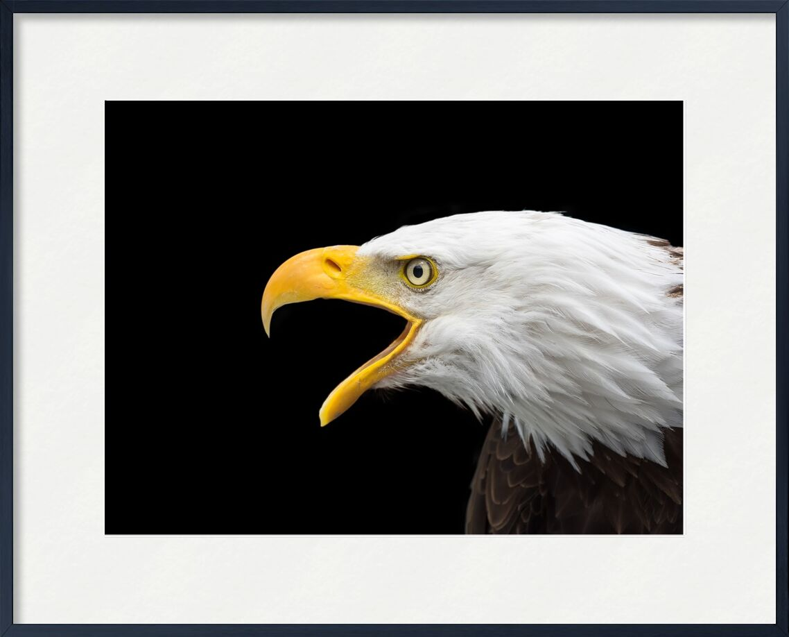 Bec de l'aigle de Pierre Gaultier, Prodi Art, Aigle chauve, rapace, tête, Fermer, Adler, oiseau de proie, oiseau, facture, aigle à queue blanch, nature, animal, portrait, oiseau sauvage, tête blanche, aigles chauves