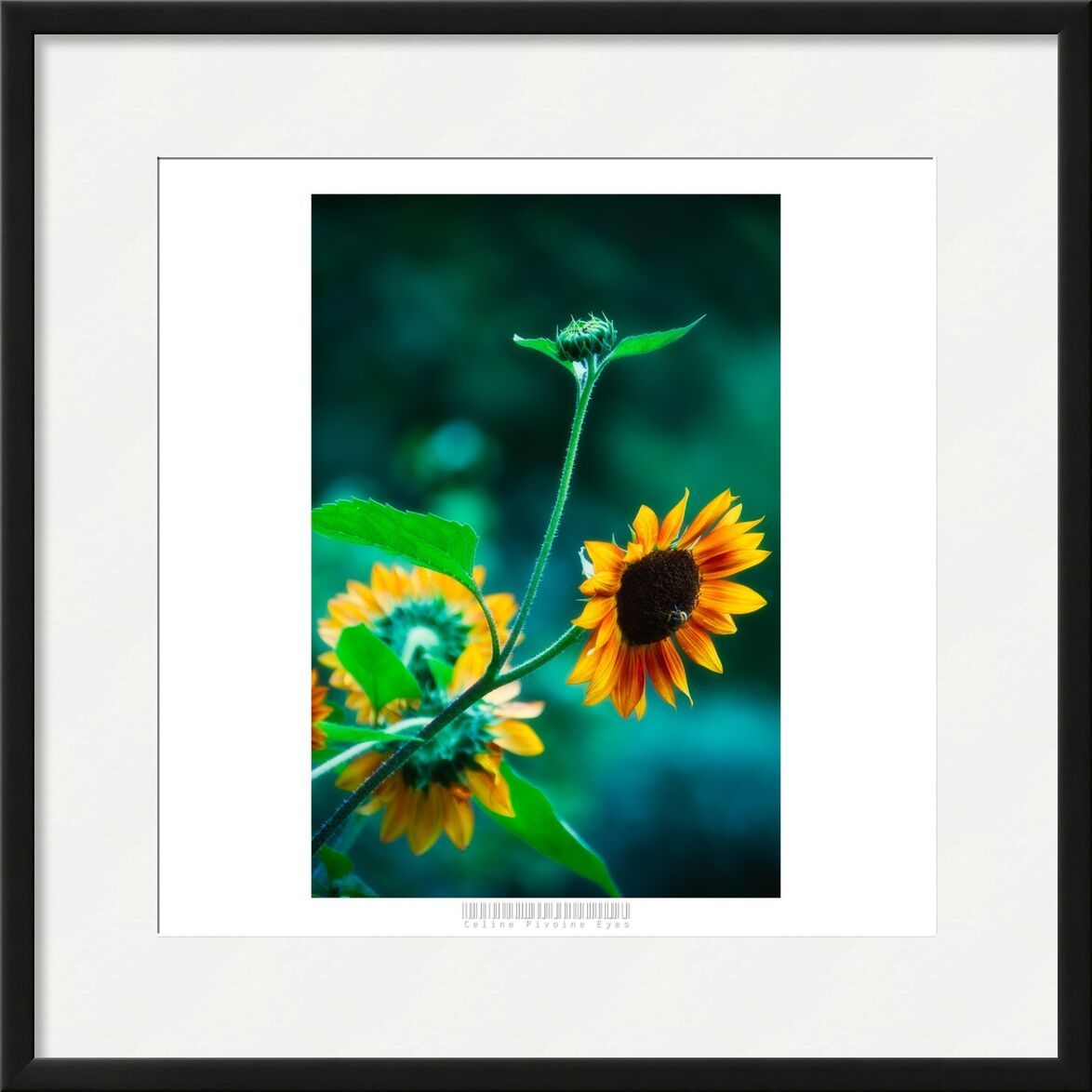 Le tournesol et l'abeille de Céline Pivoine Eyes, Prodi Art, plante, nature, abeille, insecte, jardin, jaune, fleurs, tournesol
