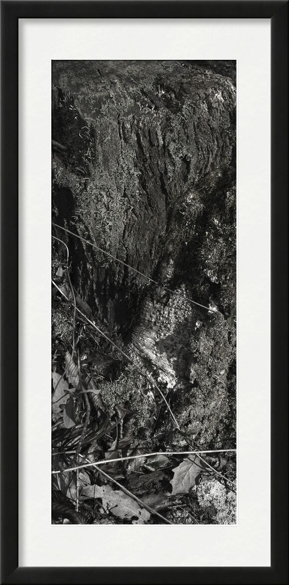 UNDER YOUR SKIN 9 from jean michel RENAUDIN, Prodi Art, material, Ivy, trunk, forest, tree, matter, alive, living, bark