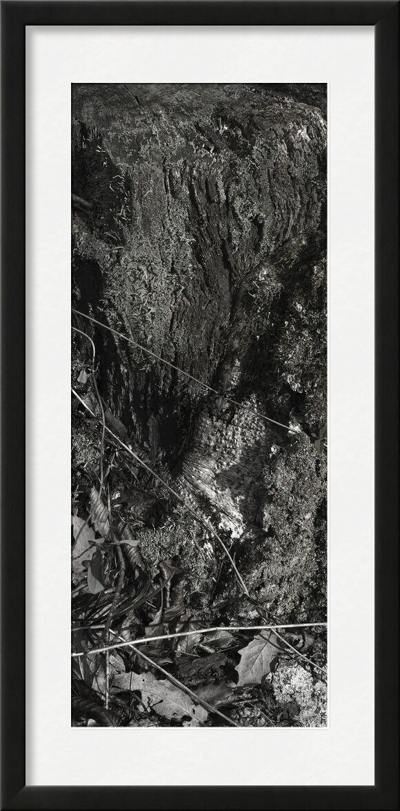 SOUS TA PEAU 9 de jean michel RENAUDIN, Prodi Art, Matériel, Lierre, tronc, forêt, arbre, matière, vivante, vivant, écorce