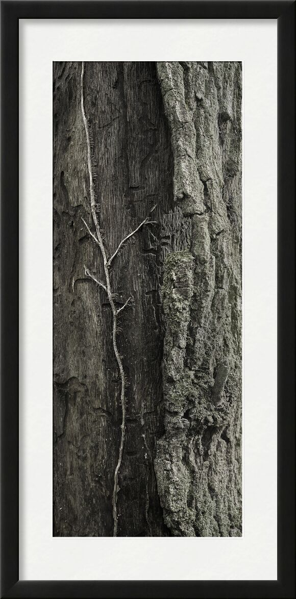 UNDER YOUR SKIN 8 from jean michel RENAUDIN, Prodi Art, bark, living, alive, matter, tree, forest, trunk, Ivy, material