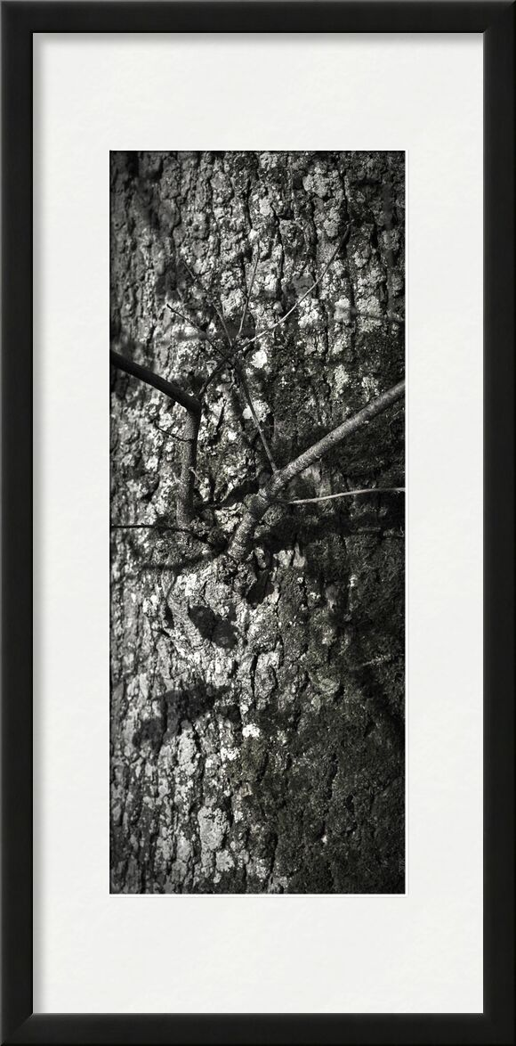 UNDER YOUR SKIN 7 from jean michel RENAUDIN, Prodi Art, material, Ivy, trunk, forest, tree, matter, alive, living, bark