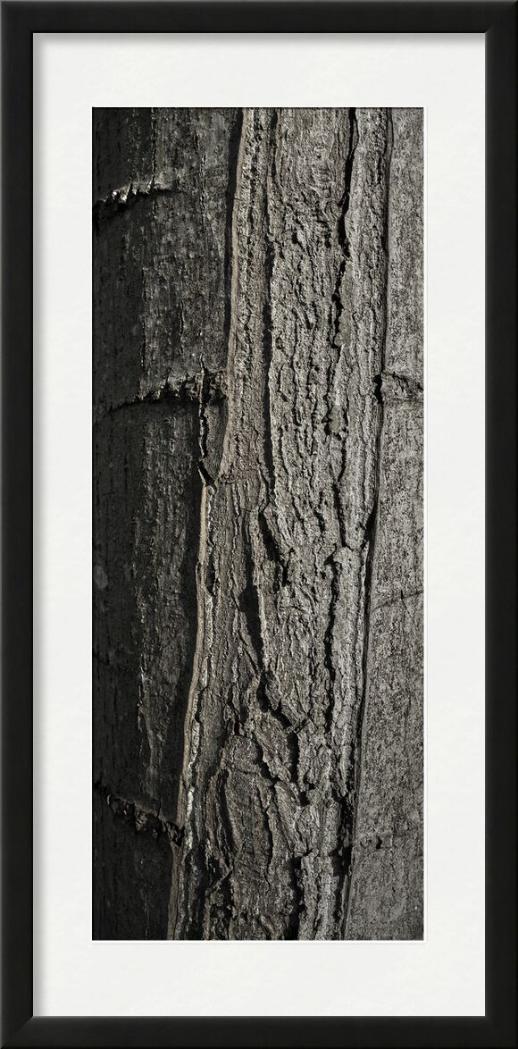 UNDER YOUR SKIN 6 from jean michel RENAUDIN, Prodi Art, material, Ivy, trunk, forest, tree, matter, alive, living, bark