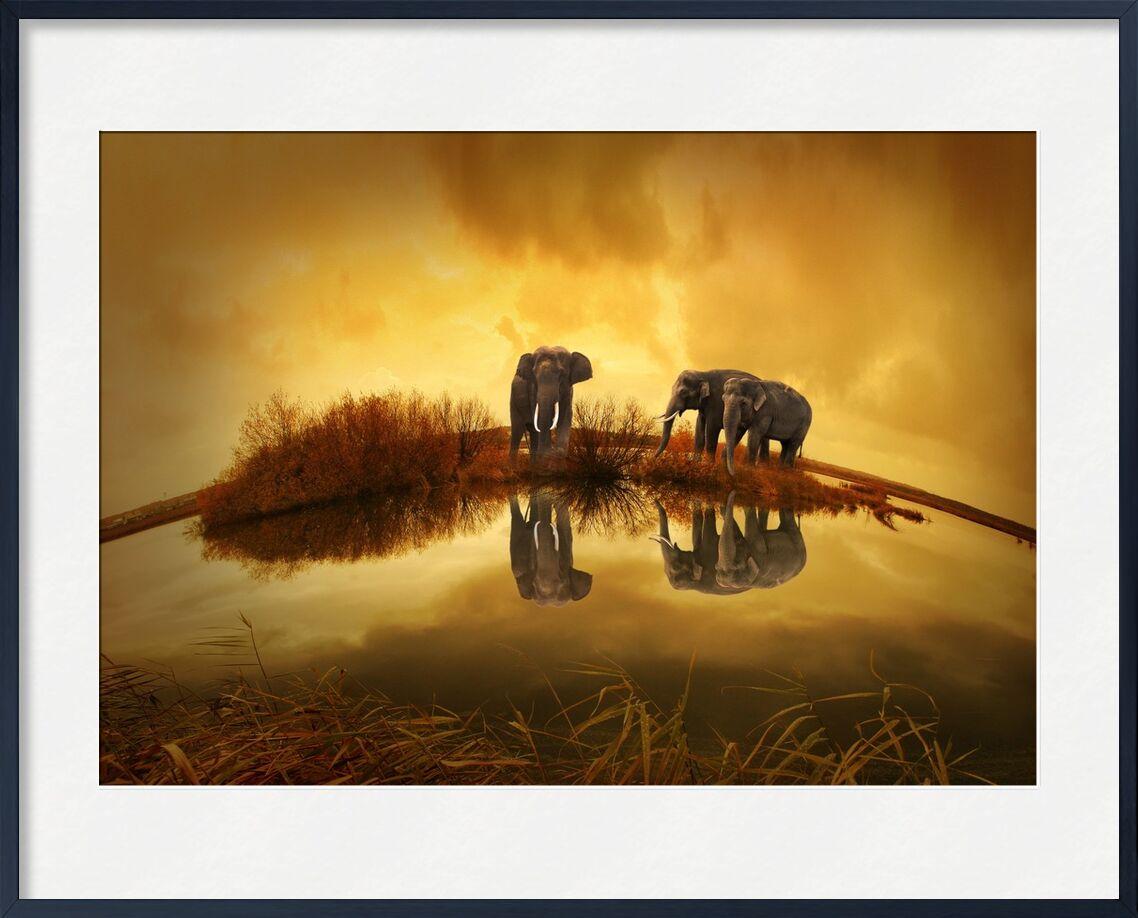 Éléphants au bord de l'eau de Pierre Gaultier, Prodi Art, animaux, nature, couché de soleil, éléphant, Thaïlande