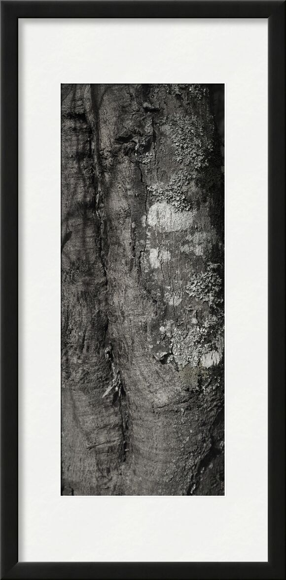 UNDER YOUR SKIN 3 from jean michel RENAUDIN, Prodi Art, material, Ivy, trunk, forest, tree, matter, alive, living, bark