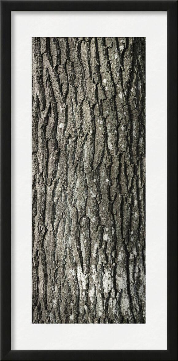 SOUS TA PEAU 5 de jean michel RENAUDIN, Prodi Art, Matériel, Lierre, tronc, forêt, arbre, matière, vivante, vivant, écorce
