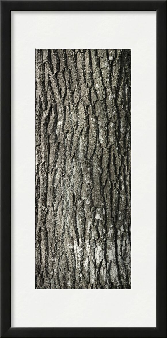 UNDER YOUR SKIN 5 from jean michel RENAUDIN, Prodi Art, material, Ivy, trunk, forest, tree, matter, alive, living, bark