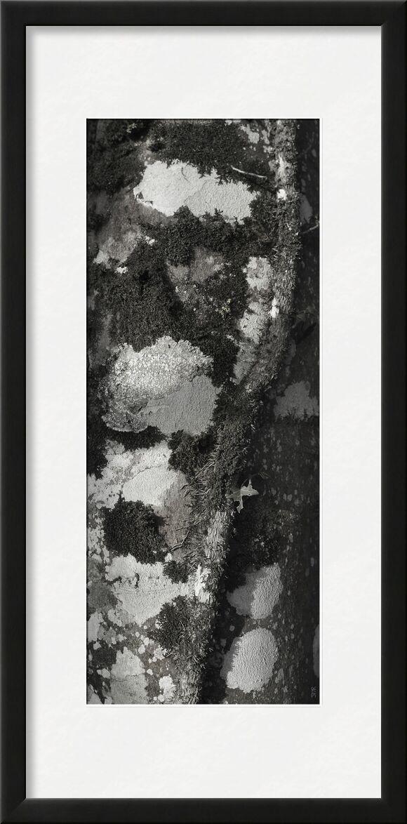 SOUS TA PEAU 4 de jean michel RENAUDIN, Prodi Art, écorce, vivant, vivante, matière, arbre, forêt, tronc, Lierre, Matériel